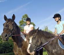 Знакомьтесь, услуга — конные прогулки | Прокат лошадей Казань